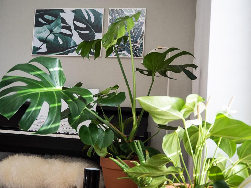 Urban Jungle Trend an Wand_mit Zimmerpflanzen wohnen